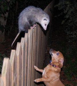 murphy-and-possum